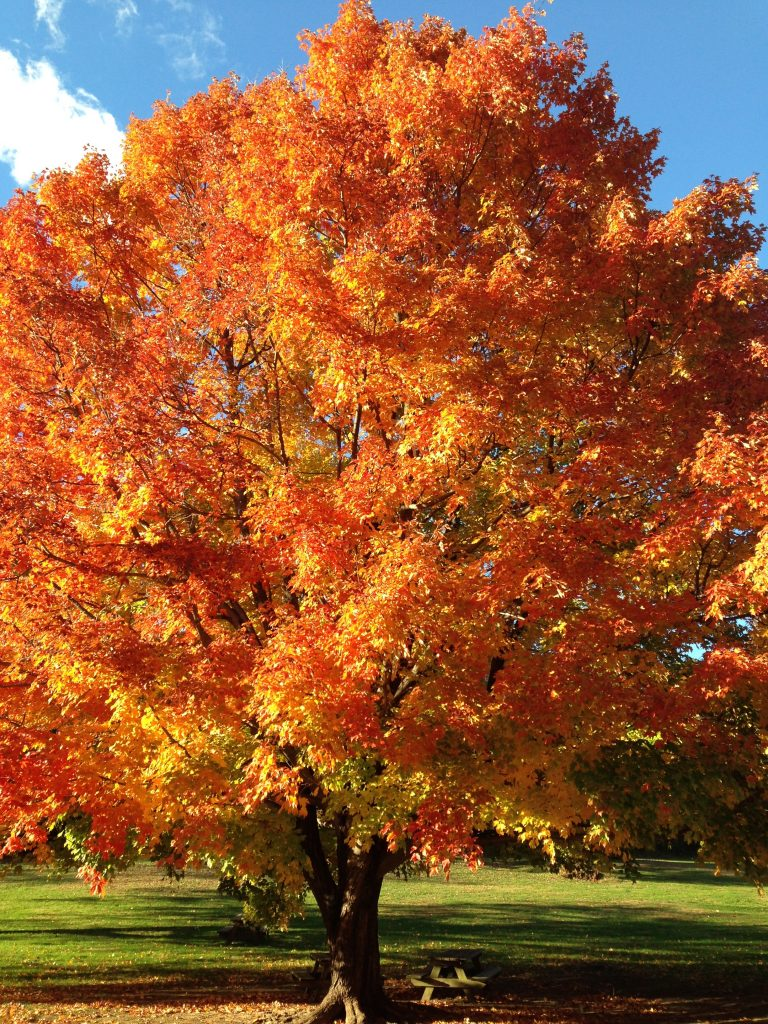emotional wellness like a beautiful tree in autumn