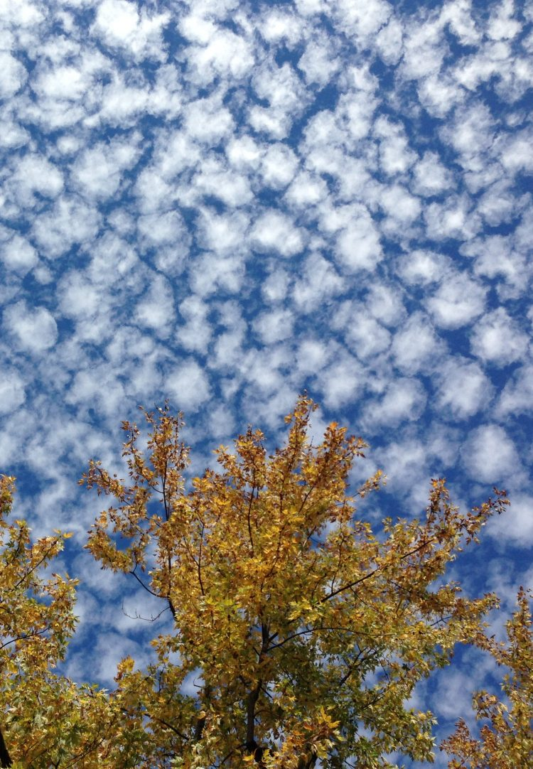 treetop and speckled clouds