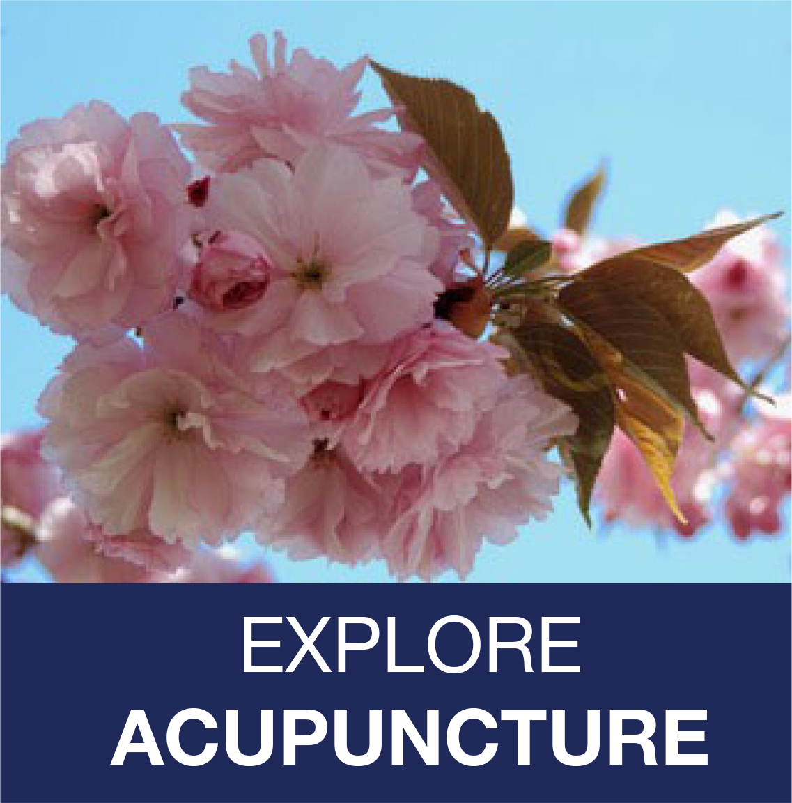 link to Acupuncture services
