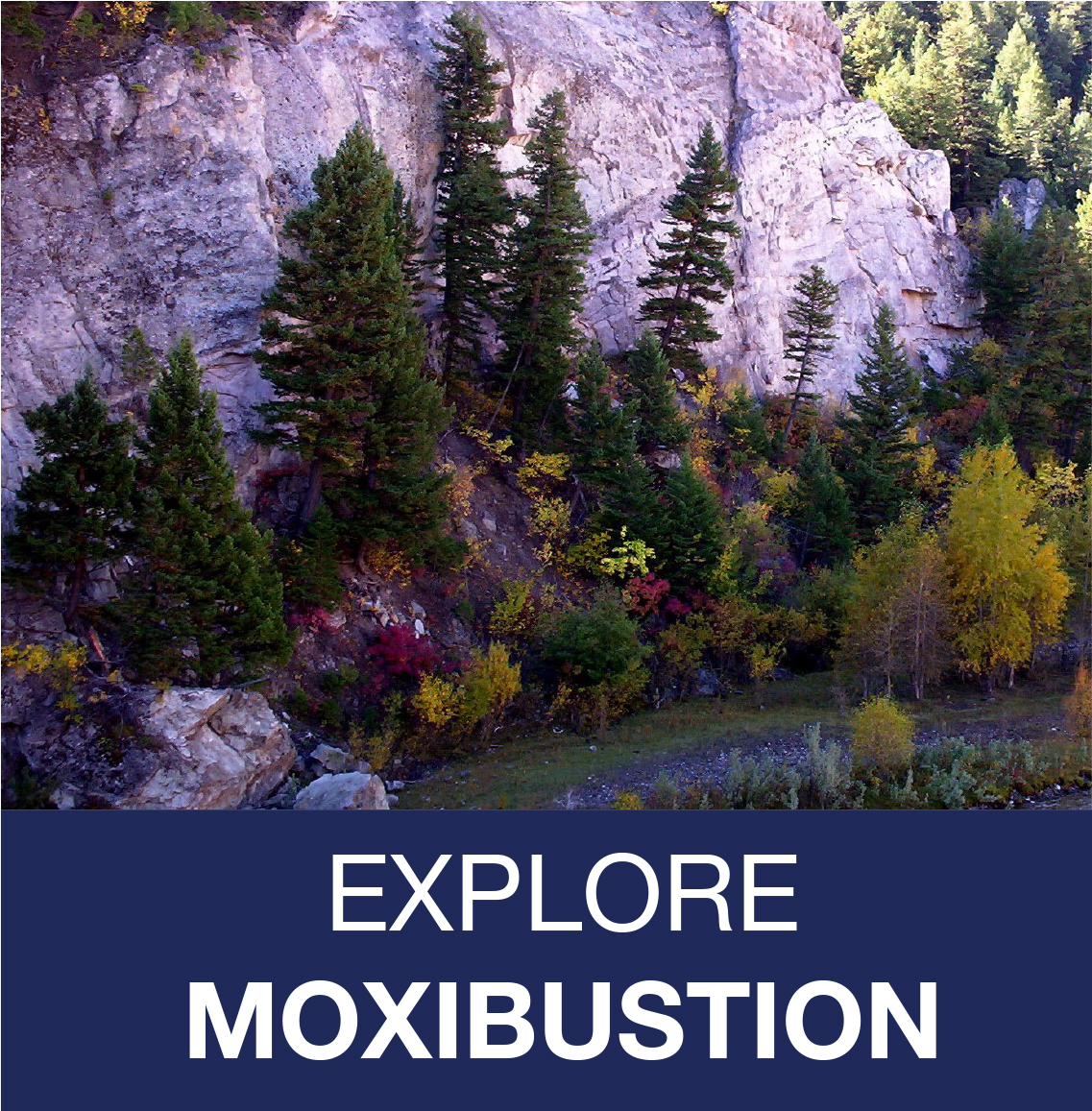 link to Moxibustion